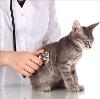 Ветеринарные клиники в Касимове